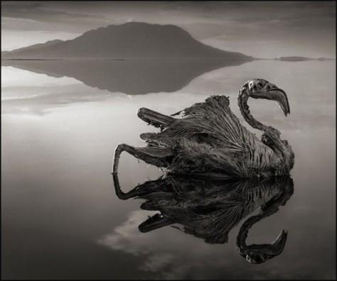 Lake-Natron2-550x460