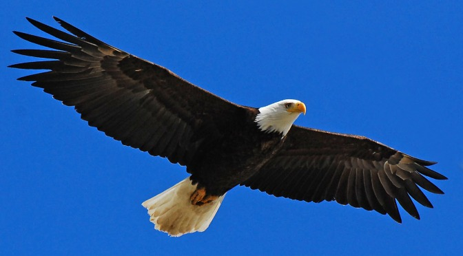 A Flying Eagle's Point of View.